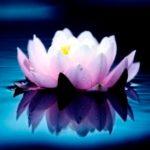 lotos, новая эра продукция, лотос